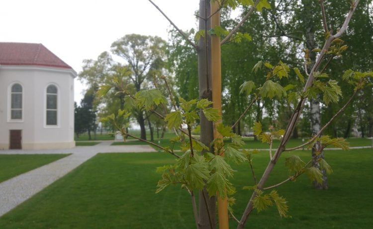 Obnova parku